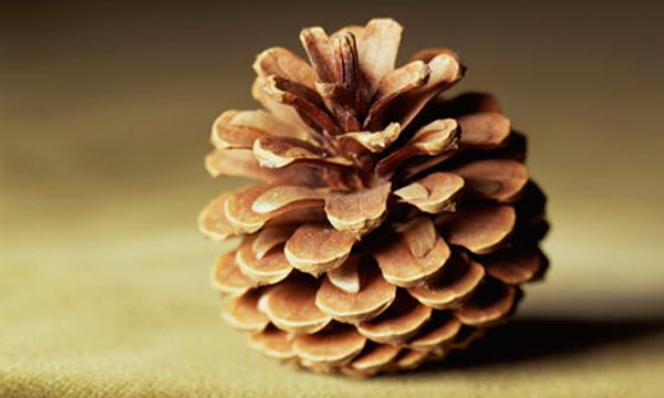 felt-and-pinecone-owl-02