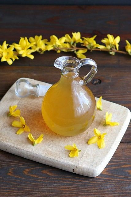 Golden Medication from the World of Plants! Discover Forsythia Flowers and Their Revitalizing Properties!