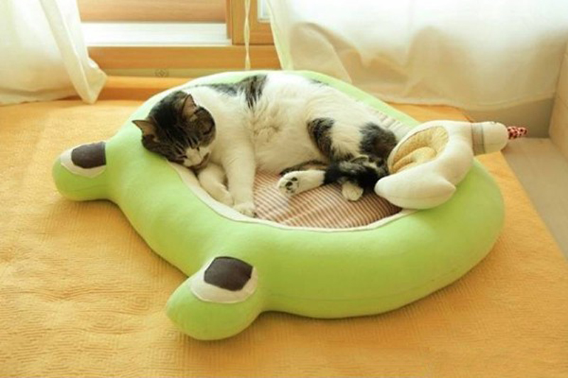 frog-shaped-bed-for-a-cat-03