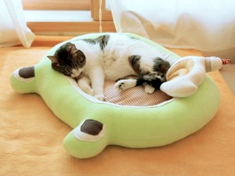 frog-shaped-bed-for-a-cat-fi