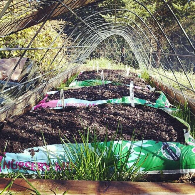 You Don't Need a Big Garden to Grow Vegetables. Sometimes a Bag of Universal Soil Can Do Just as Well!