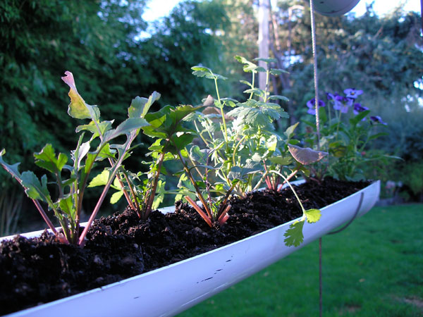 hanging-gutter-garden-step07