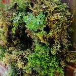 herb-wreath-fi