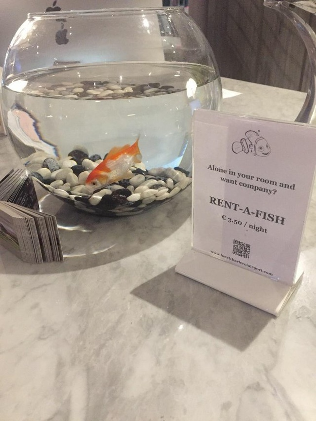 14 Amazing Hotels That Know What to Do to Make Their Guests Happy