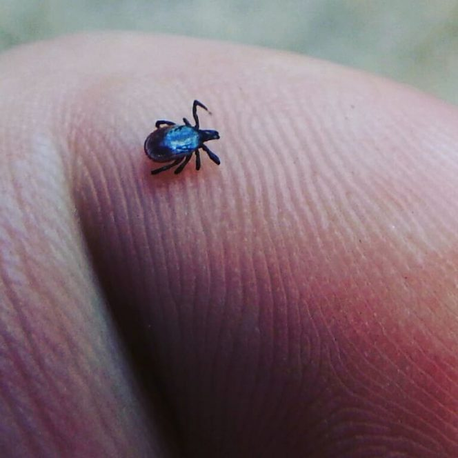 How to Protect Yourself against Tick Bites? 5 Natural Ways to Do It