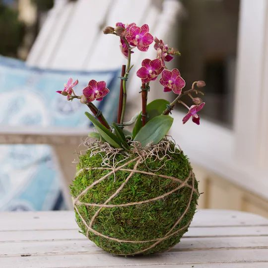 Kokedama – the Art of Growing Plants Without Pots. This Is a Modern Gardening Trend in Japanese Style
