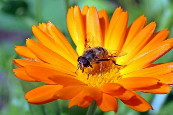 20 Plants Bees Will Be Grateful for If You Have Them in Your Garden