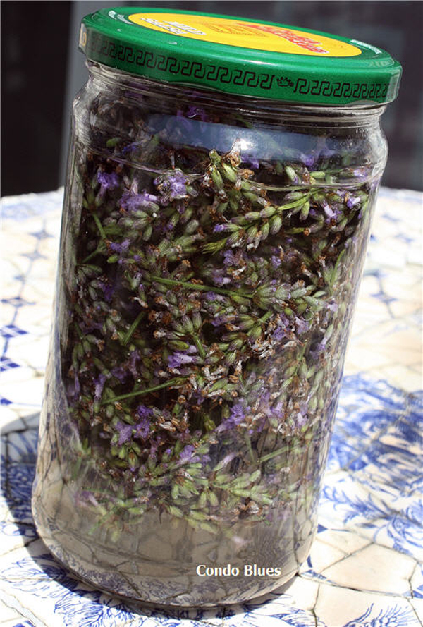 lavender-extract-01