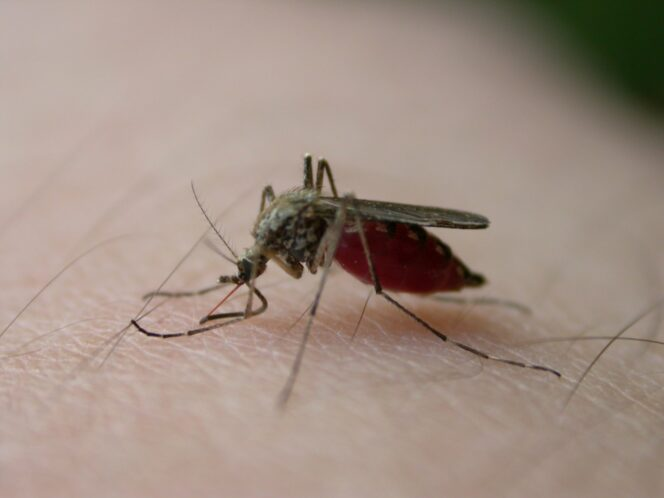 Home-Made Mixture to Keep Mosquitoes at Bay
