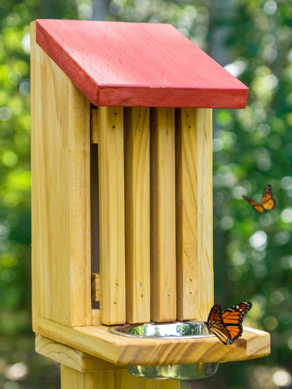 How to Attract Butterflies to Your Garden. Four Hacks That Always Work