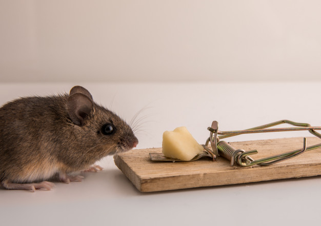 Effective Ways to Get Rid of Mice