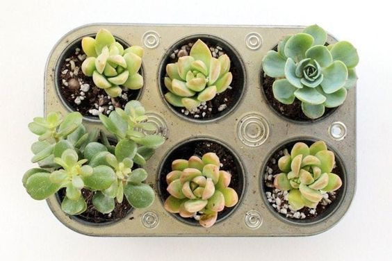 11 Unusual Applications of Muffin Trays. It's Not Just the Kitchen Where They Can Come in Handy