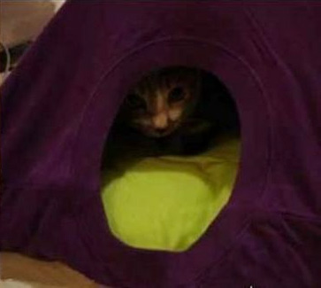 Old T-shirt Cat Tent