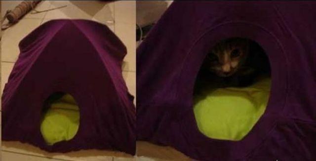 Old T-shirt Cat Tent 03