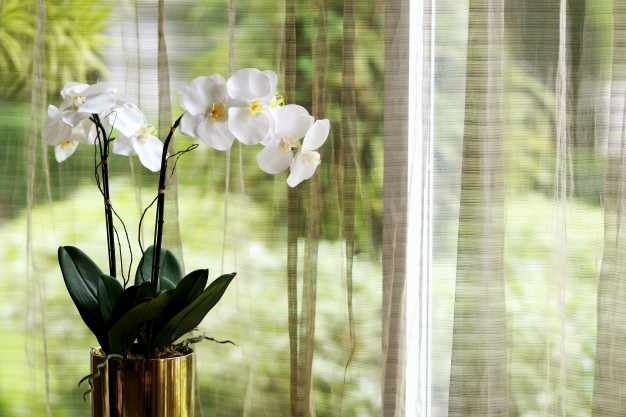 My Grandmother's Secrets of Growing Wonderful Orchids. They Bloom Insane!