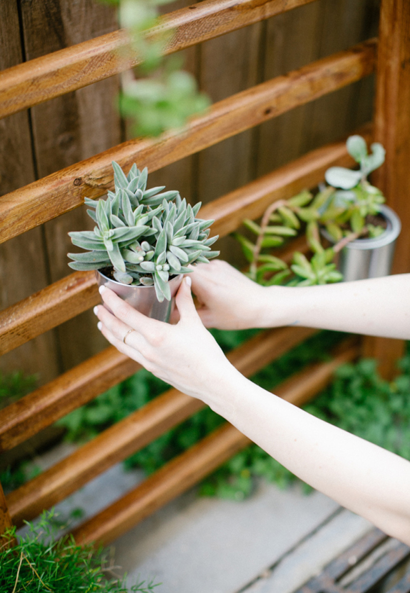 How to Make Outdoor Succulent Wall Accent - DIY & Crafts ... on Outdoor Garden Wall Ideas id=44143