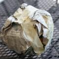 paper-mache-animal-head-01