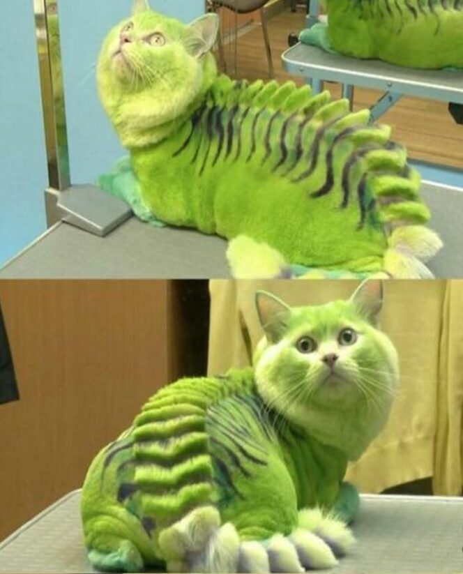 17 Pets That Look Really Bad After a Visit to the Groomer. You Won't Stop Laughing!