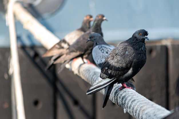 4 Effective and Humanitarian Ways to Keep Pigeons Away from Your Balcony