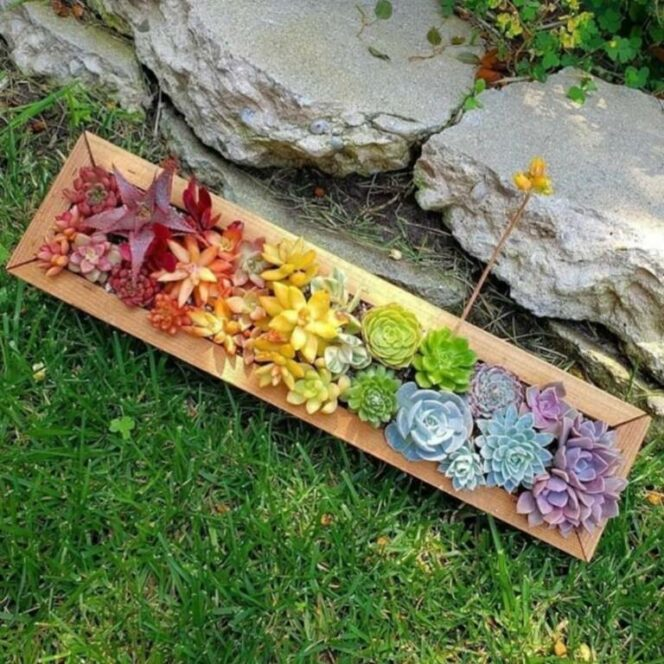 These Succulent Compositions Look like They Were Painted by an Artist