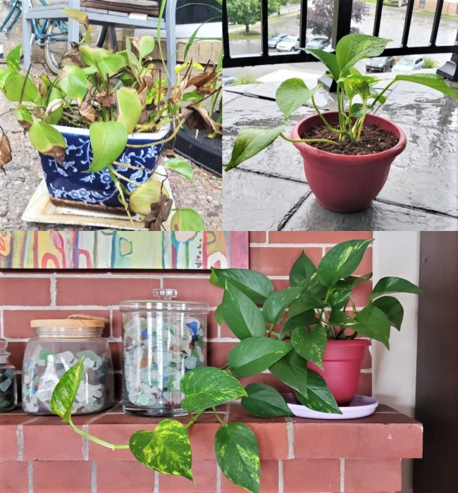 11 Most Common Mistakes Made When Taking Care of Potted Plants