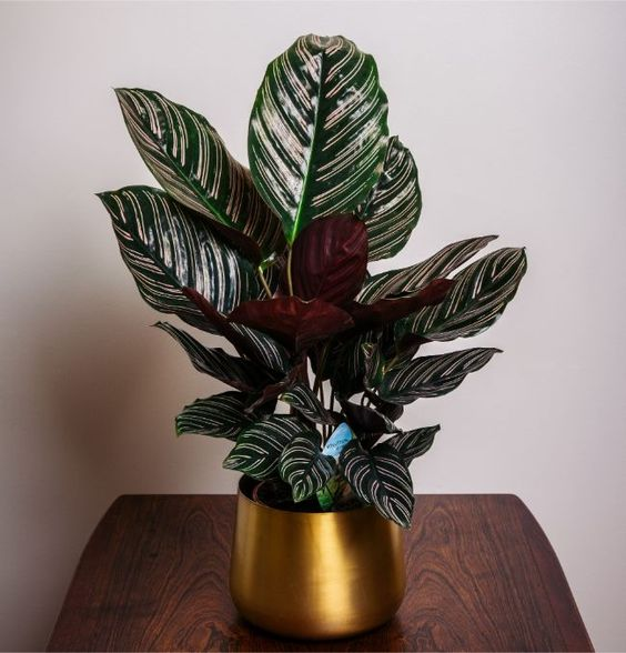 9 Potted Plants with Leaves of Red Wine. You Won't Take Your Eyes off Them!