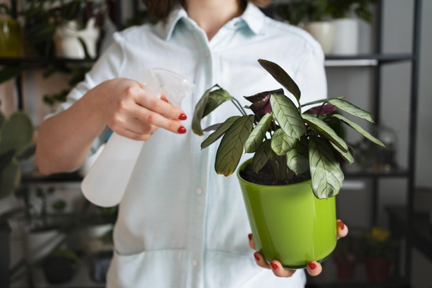 6 Quick Ways to Remove Dust from Leaves of Potted Plants. They Will Soon Shine Again!