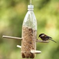 plastic-bottle-bird-feeder-collage01.jpg