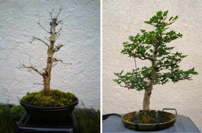 19 Potted Plants That Have Been Brought Back to Life