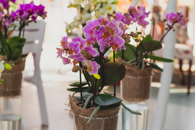 10 Potted Plants with Positive Powers. They Bring Luck and Happiness to Everyone Who Has Them at Home!