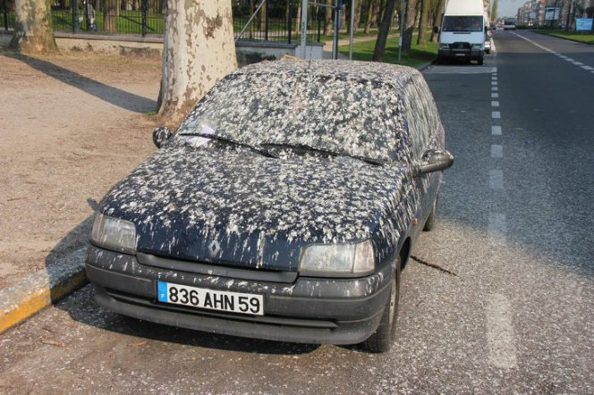 Birds Excrements Can Do Irretrievable Damage to Your Car's Paint. We Know How to Get Rid of Them without Scrubbing