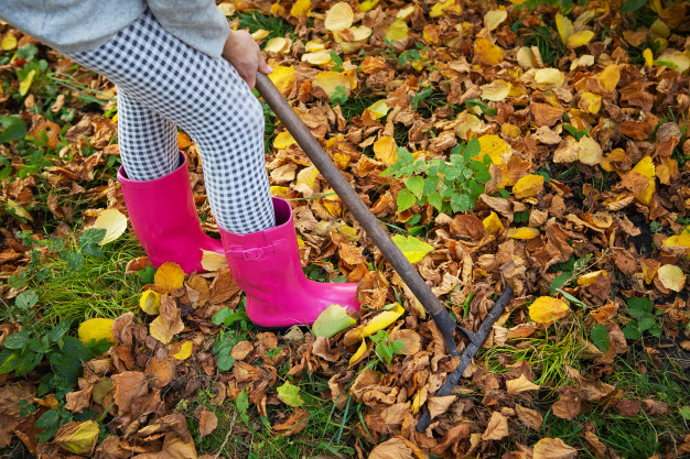 Rake the Leaves or Leave the Job for the Nature? This Is a Dilemma Each Gardener Has to Face Every Single Year