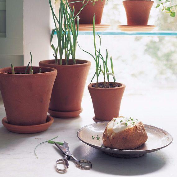 how to grown garlic