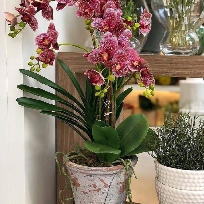 11 Principles You Must Follow If You Want to Take Good Care of Your Plants