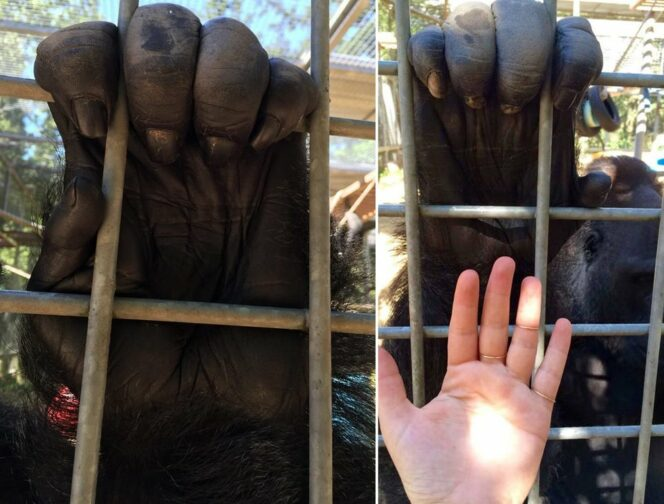 19 Fantastic Photos That Will Surprise Even the Smartest. They Prove That Size Does Matter!