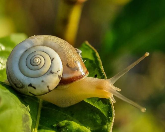 3 Natural Ways to Get Rid of Snails from Your Garden. They Will Be Gone for Good