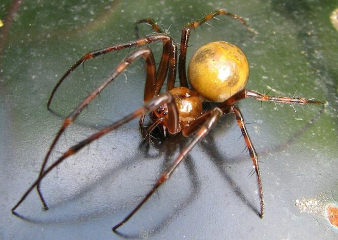 11 Thrilling Facts about Spiders. This Article Is Not for Anyone Suffering from Arachnophobia