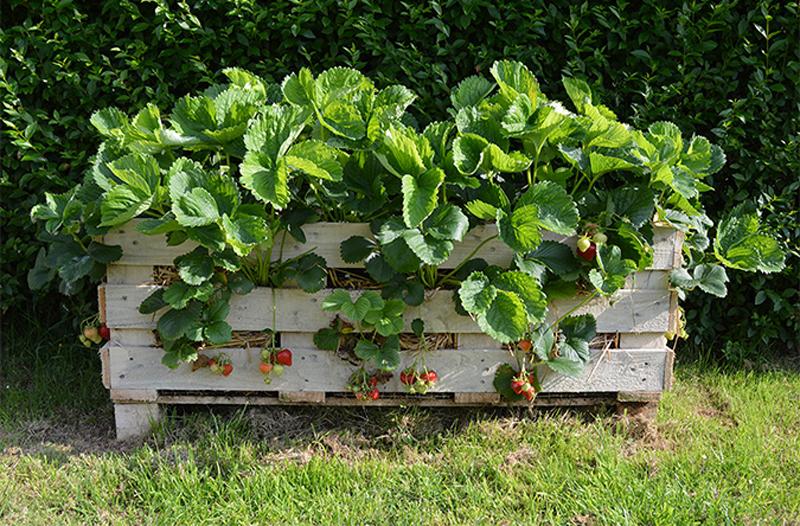 strawberry-pallet-planter-04