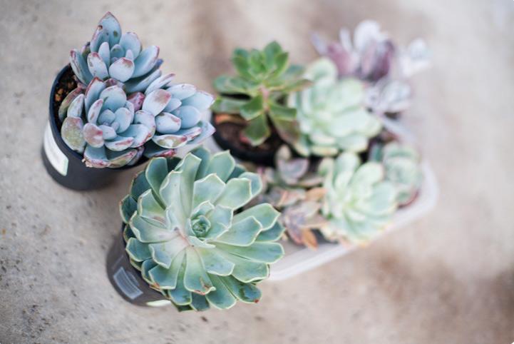 succulent-in-a-jar-01
