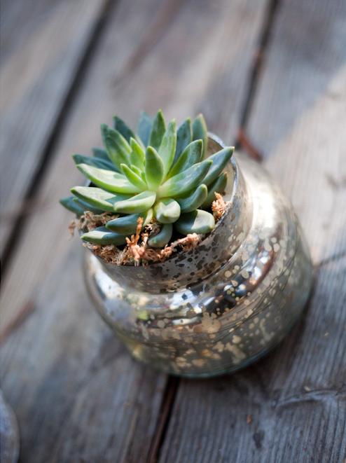 succulent-in-a-jar-02