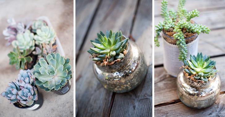 How To Make Succulent In A Jar Diy Crafts Handimania