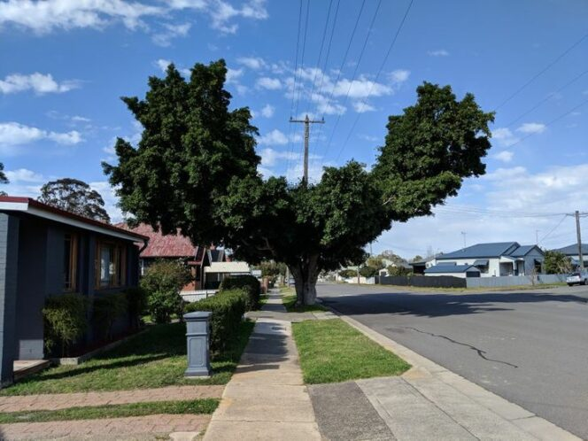 15 Pictures Showing How Trees Can Be Given a Chance to Adapt to Urban Conditions