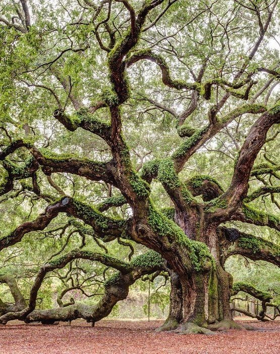 25 Really Uncommon Trees That Few Believe They Are Real