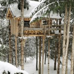 Treehouse to Live in