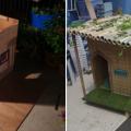 tropical-dog-house-fb