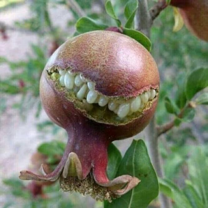 23 Weird Shapes of Fruit and Vegetables. Sometimes You Will Have to Look Twice!