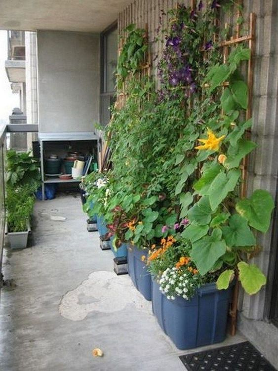 10 Vegetables You Can Grow on Your Balcony. Create Your Own Tiny Vegetable Garden