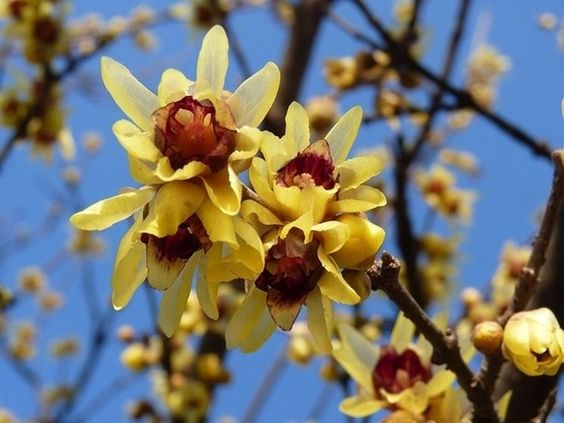 9 Garden Plants Blooming in the Winter. Frost or Snow, They Amaze Everyone With Their Colors