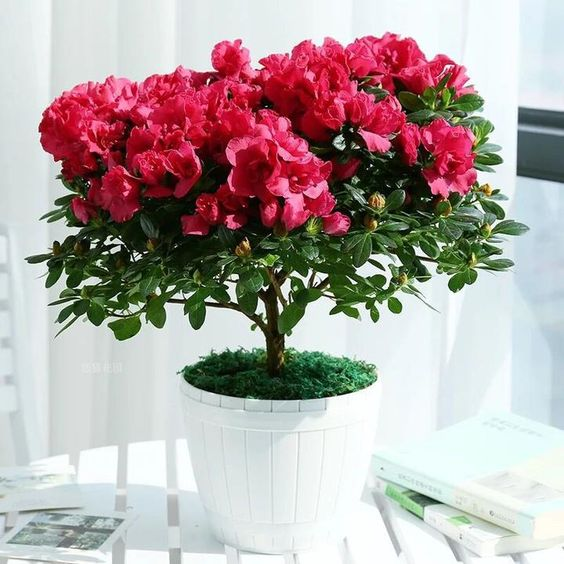 7 Potted Plants Blooming Only in the Winter. Let Them Bring in Some Summer Colors!