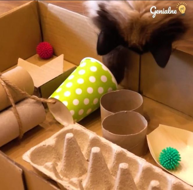 A Toy to Keep Your Cat Busy for Hours. You Can Make It Yourself